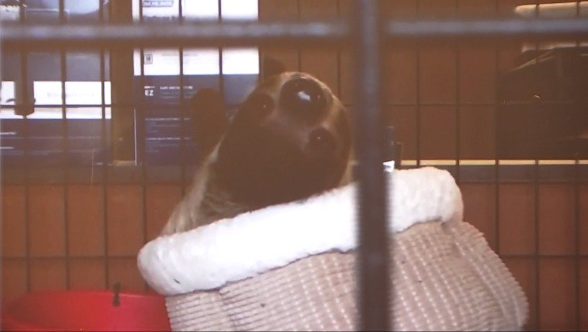 Sloths, other exotic animals seized from Olympia home