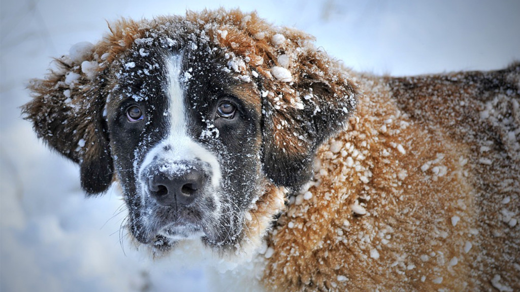Keep your pets safe in freezing temperatures