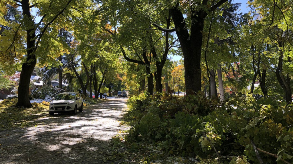 'We've been through ice storm, wind storm and now the snowstorm': Work load grows for arborists