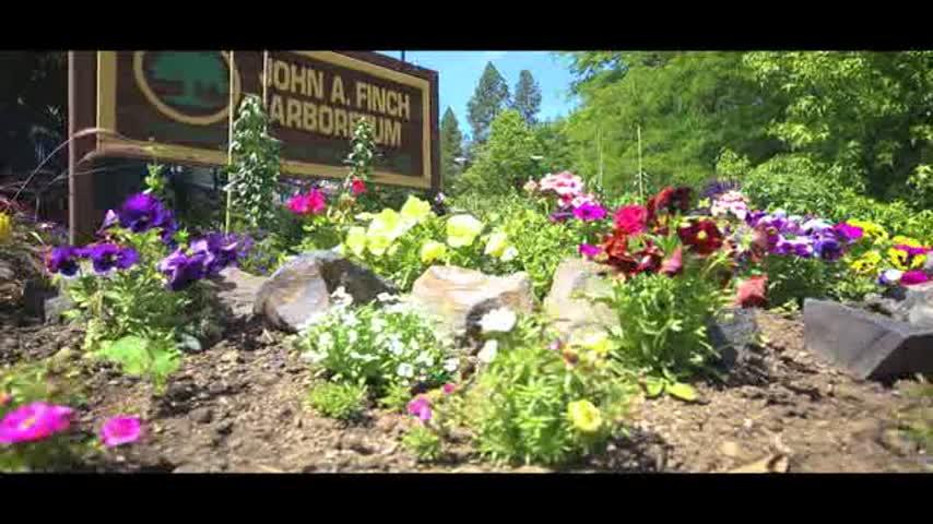 Celebrate Arbor Day with free activities at Spokane's Finch Arboretum