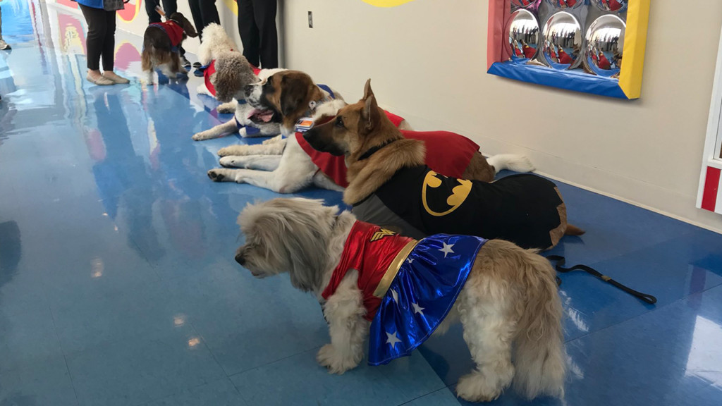 Superhero Day Pet Parade