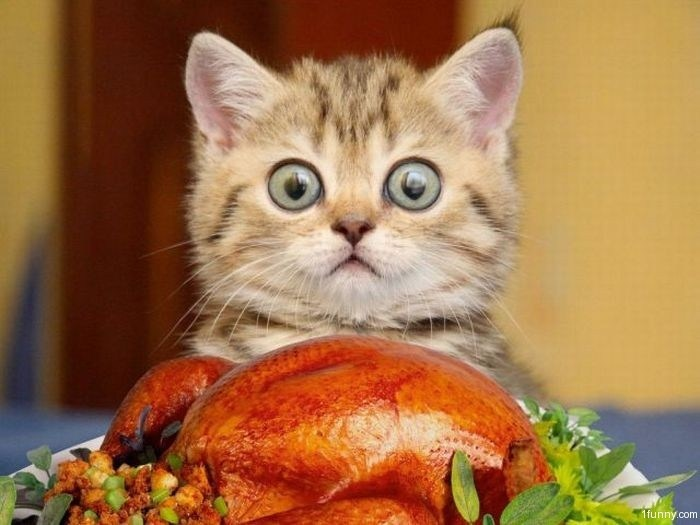 Sound Off for November 26th: What are you thankful for?