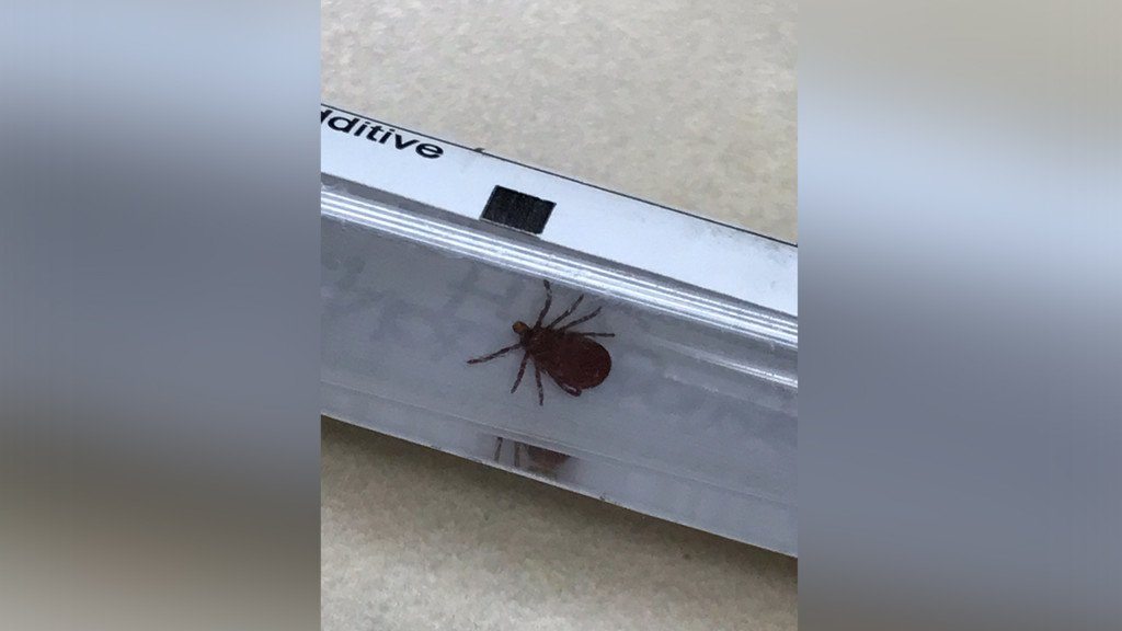 Spokane veterinarians see case of tick paralysis in patient, recommend protecting your pets