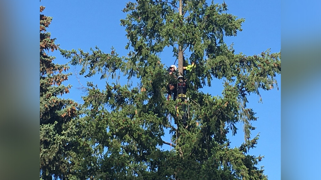 Crews working to remove boy stuck in 80-foot tree at Nevada Park