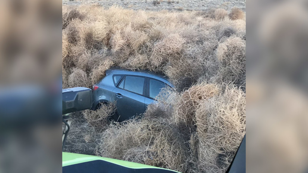 Cars in southern Washington get caught in tumblewoods