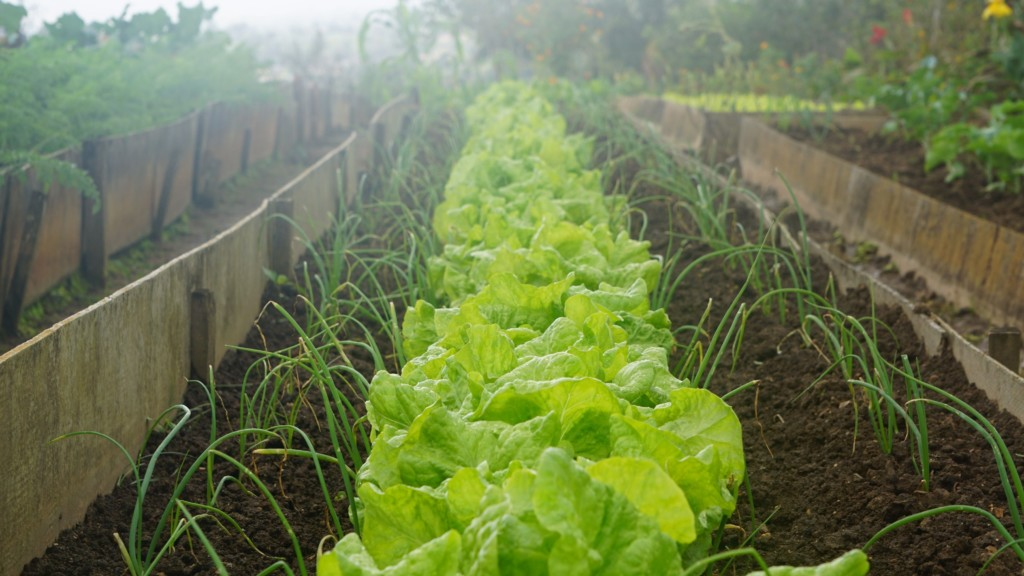 #happylife: How to prepare your vegetable garden for the first frost