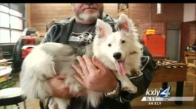 North Idaho dog featured in Animal Planet's Puppy Bowl XI