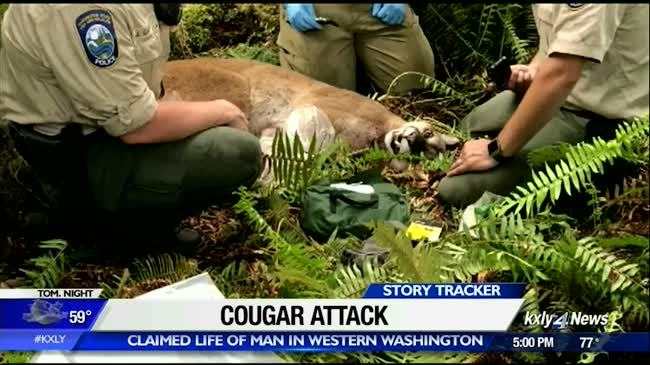 Emergency call: 'I got attacked by a mountain lion'