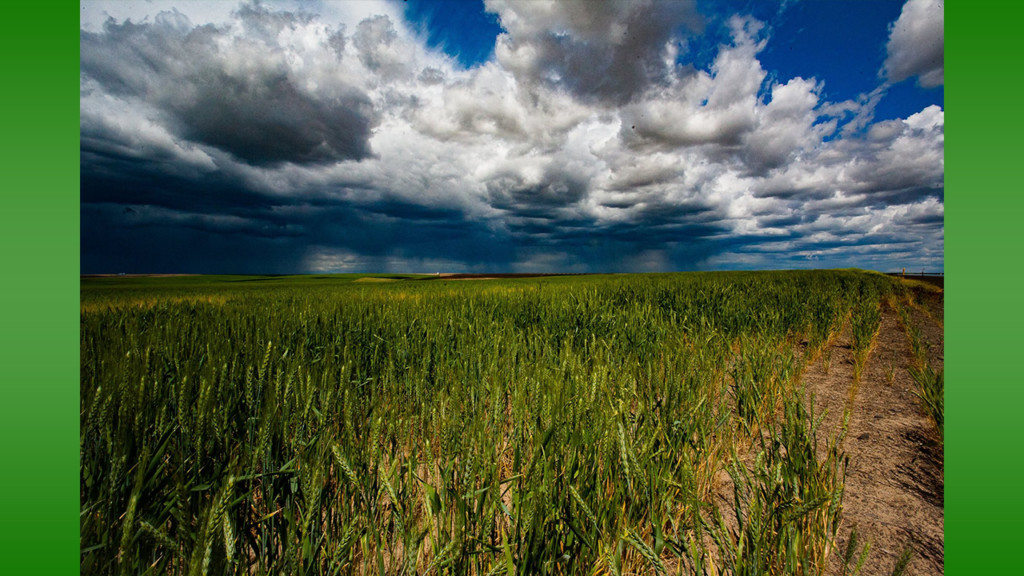 Washington Association of Wheat Growers opposes pesticide bills