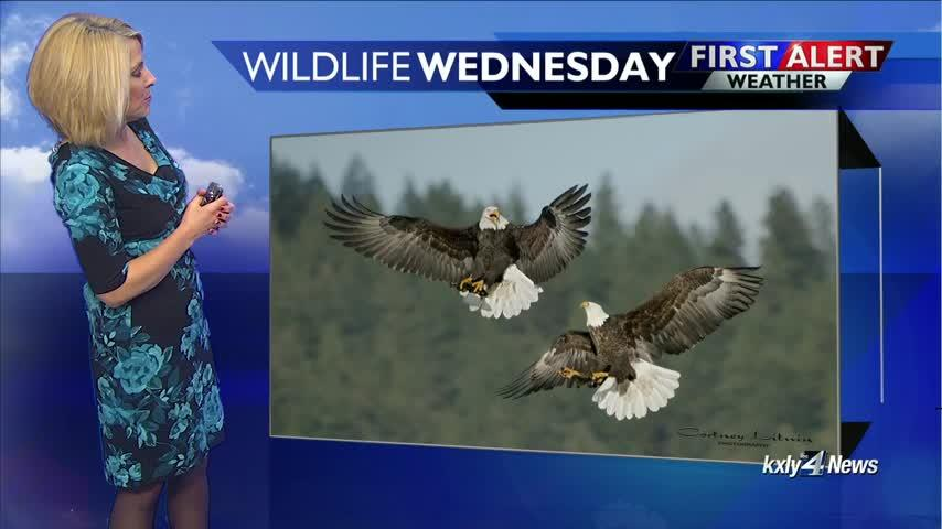 Wildlife Wednesday for December 26