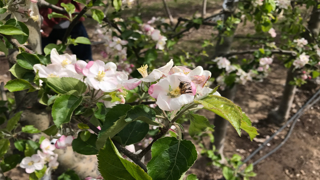 WSU donations feed momentum to build a world-renowned pollinator center on campus
