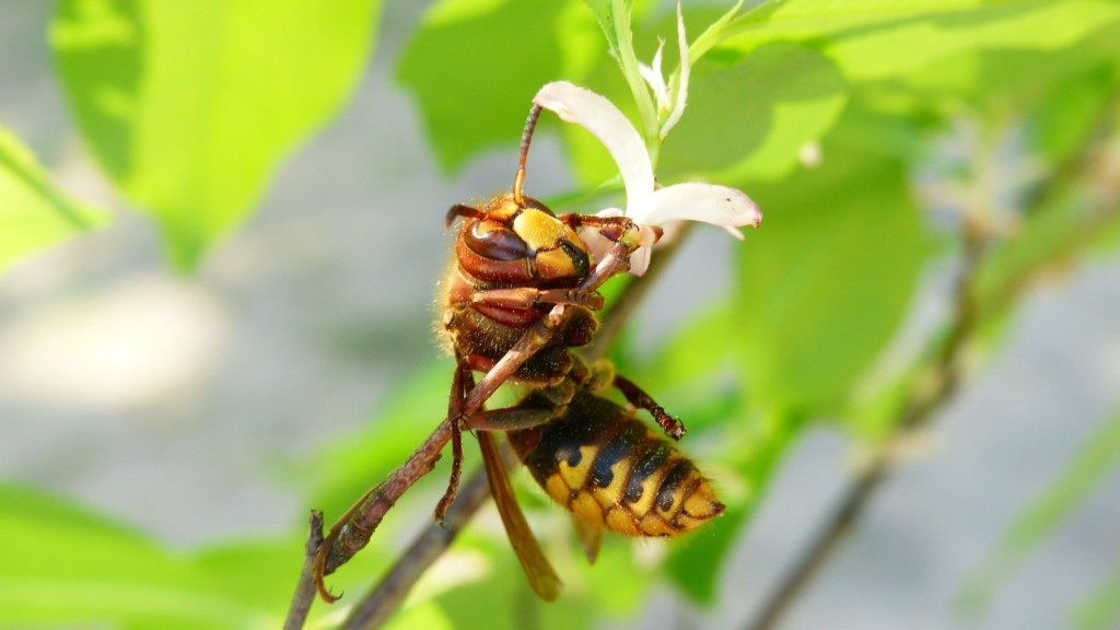 Prepare your home and yard for a busy yellow jacket season