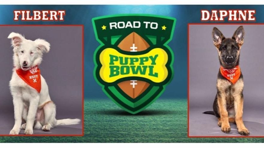 Two dogs from Double J Dog Ranch will be in the Puppy Bowl.