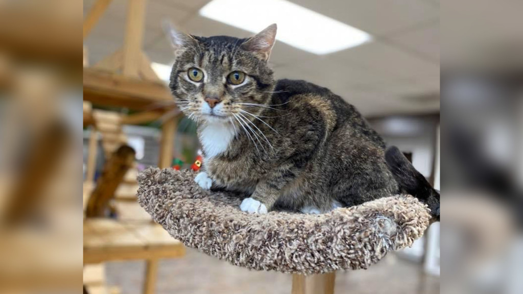 A cat named Allan sits perched atop a cat tree.