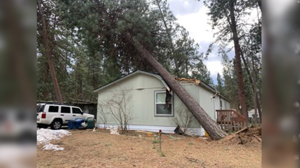 trees fall on mobile home park