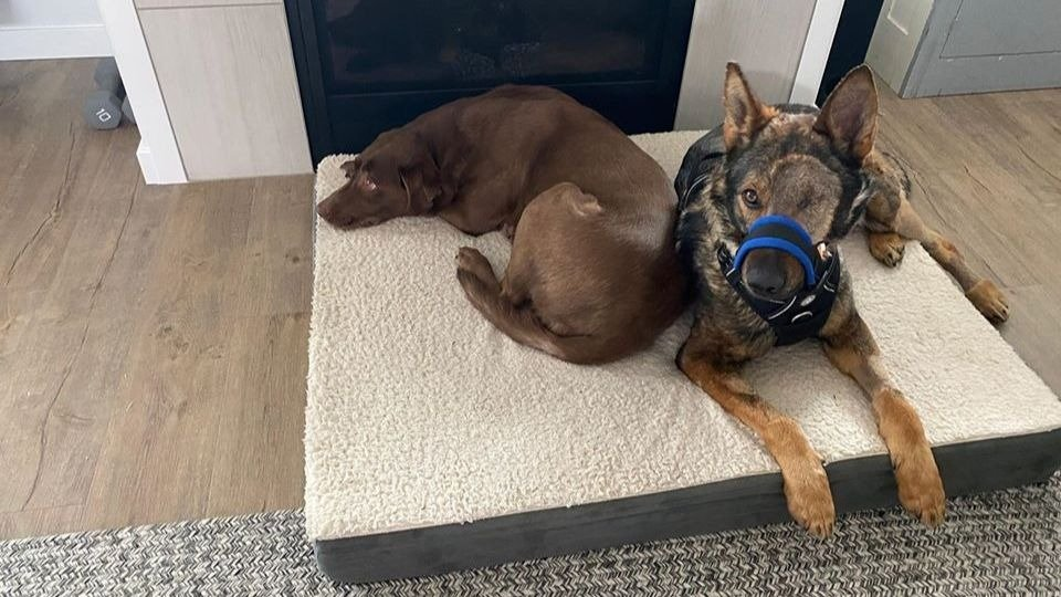K9 Chief recovers at home