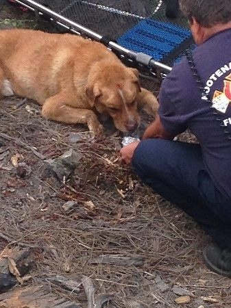 Gallery: Post Falls dog rescue