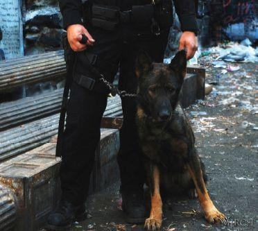 K-9 Maximus Gets The Job Done