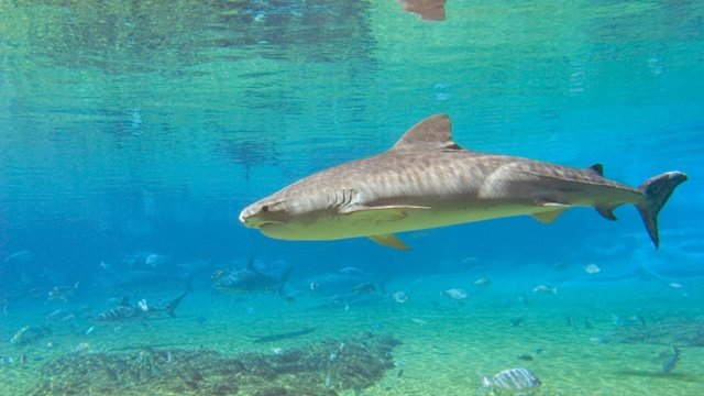 For 2nd day, shark sightings close some Hawaii beaches