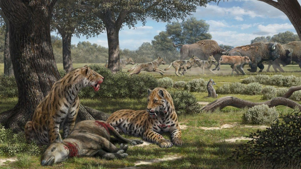 Why do coyotes still exist, but not saber-toothed cats?