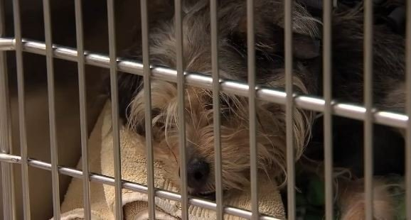 Portland shelters, animal hospital busy after the Fourth
