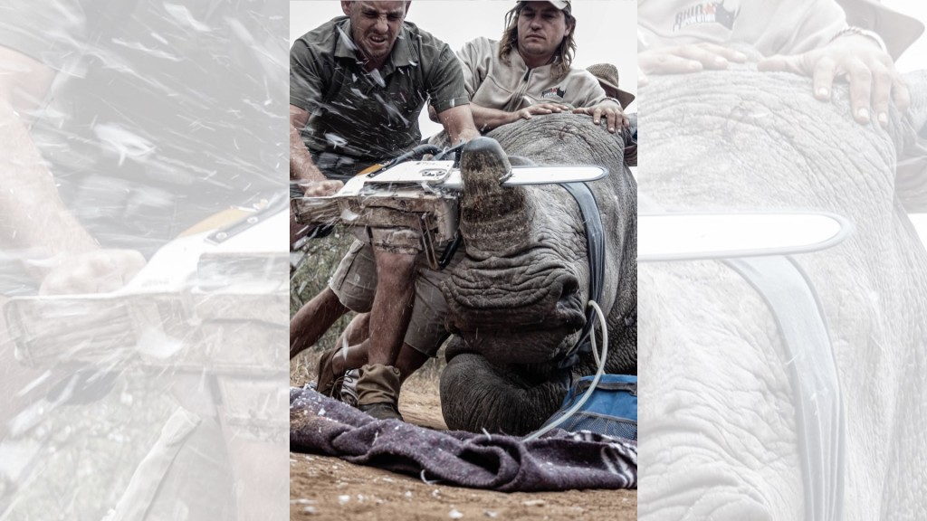 South African student fights animal poaching using wildlife photos