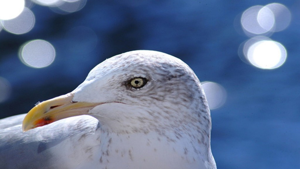 Drunken seagulls prompt uptick in animal rescue calls