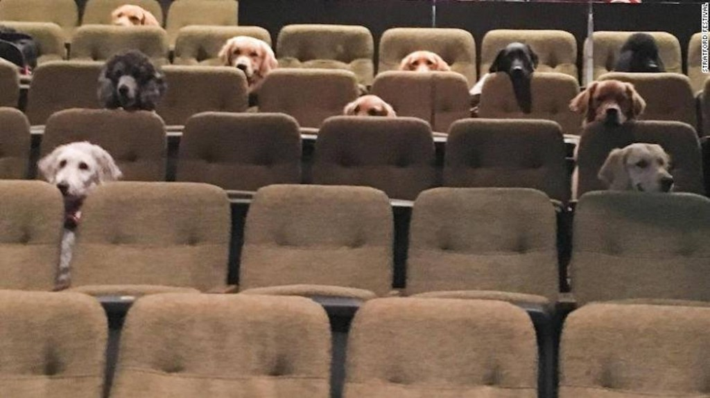 Canadian service dog crew watches live musical as part of training
