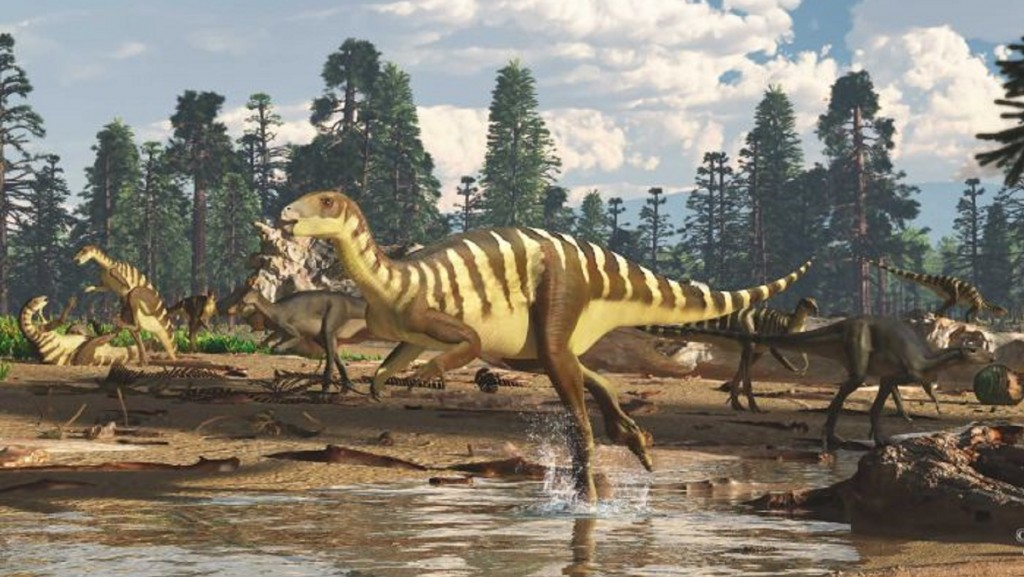 Dinosaur fossil found in Australia was wallaby sized