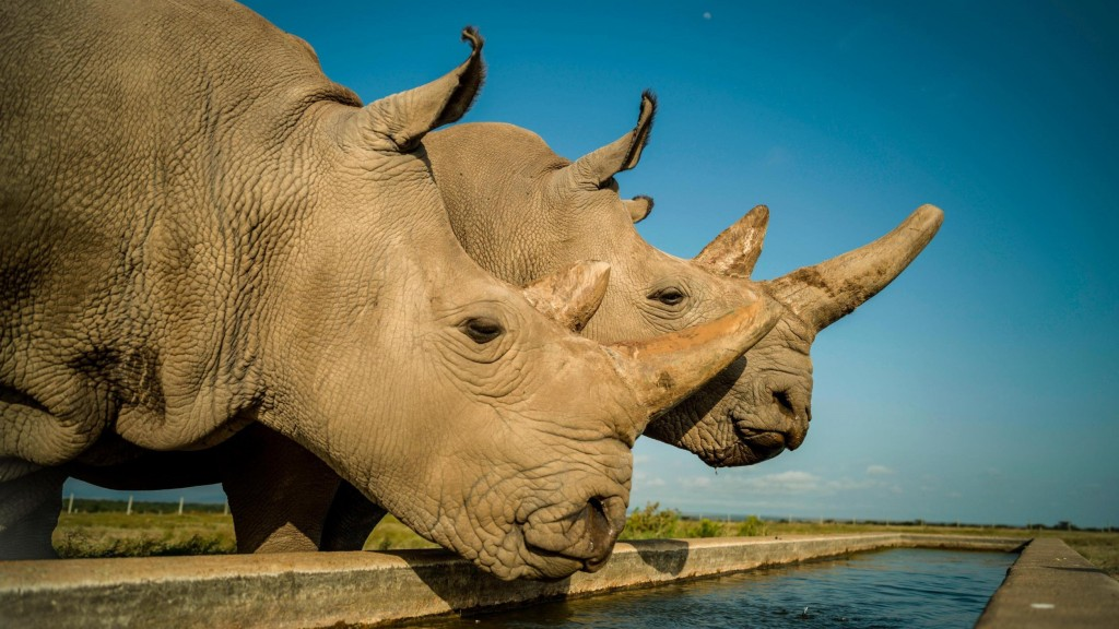 Eggs extracted from last 2 northern white rhinos may save species