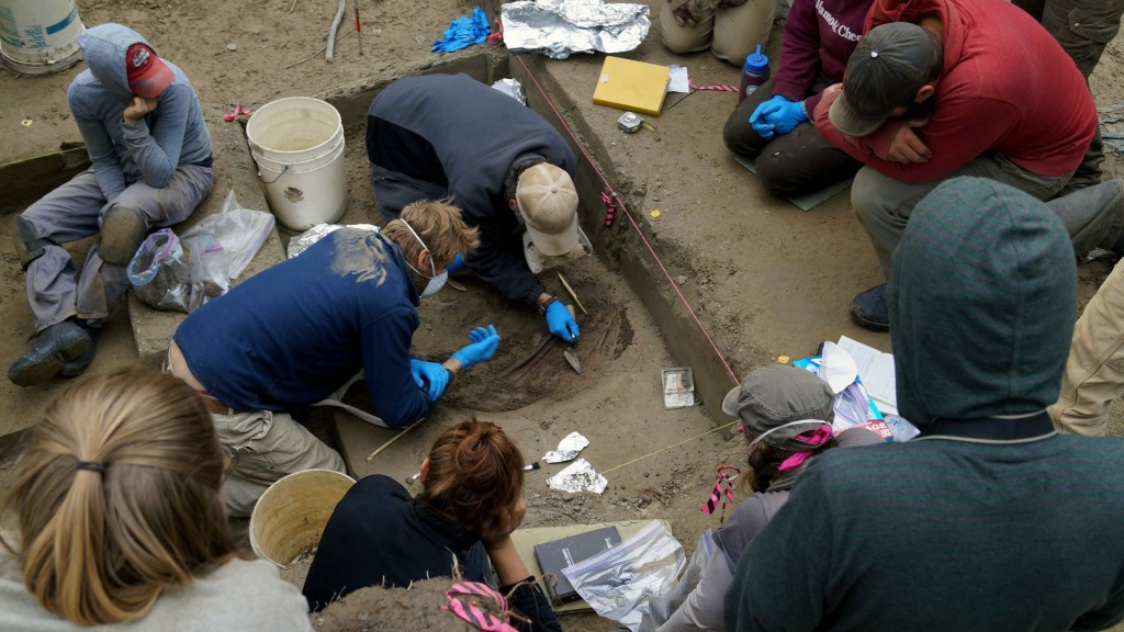 11,500-year-old infant remains reveal ancient population
