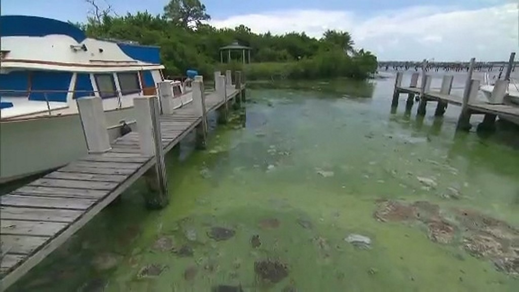 Dog-killing toxic algae discovered in 3 New York City parks