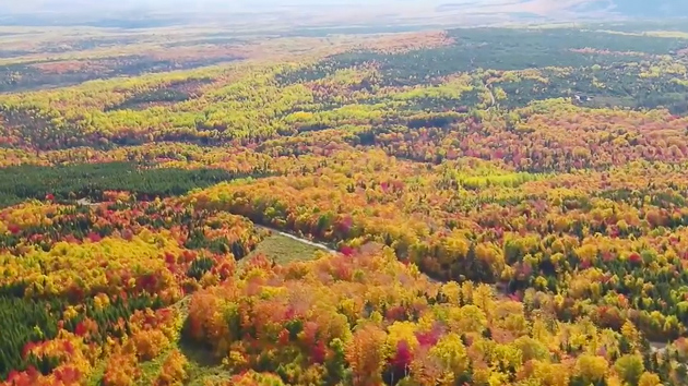 See gorgeous fall colors in Maine from a drone