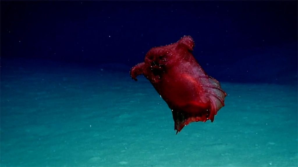 How image of 'headless chicken monster' may help Antarctic conservation