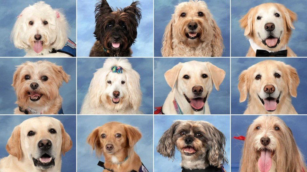 Parkland therapy dogs have their own special yearbook page