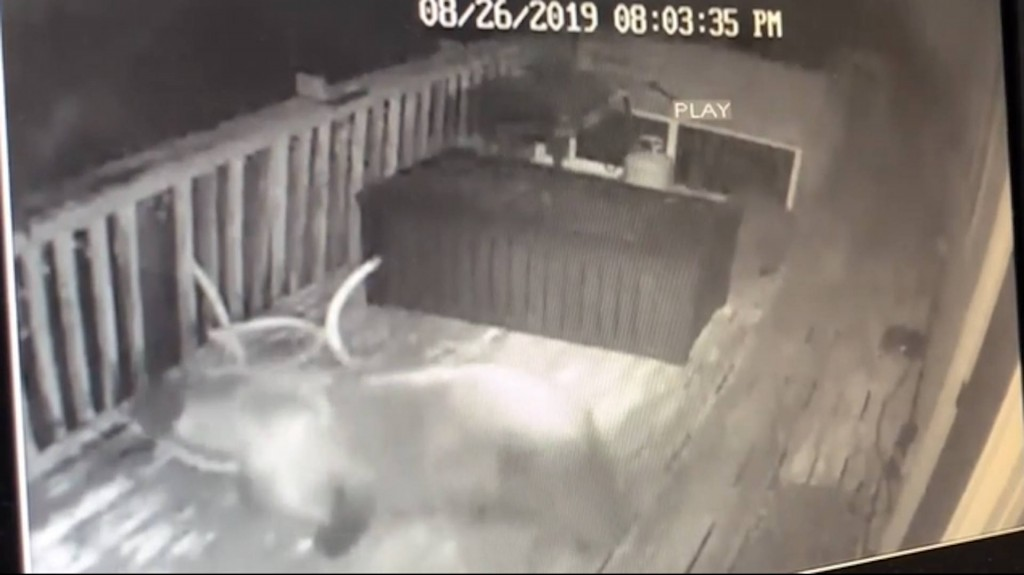 Colorado pair fights bears off with bat