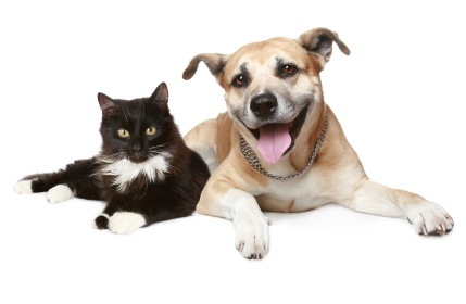 Are your pets disrupting your sleep?