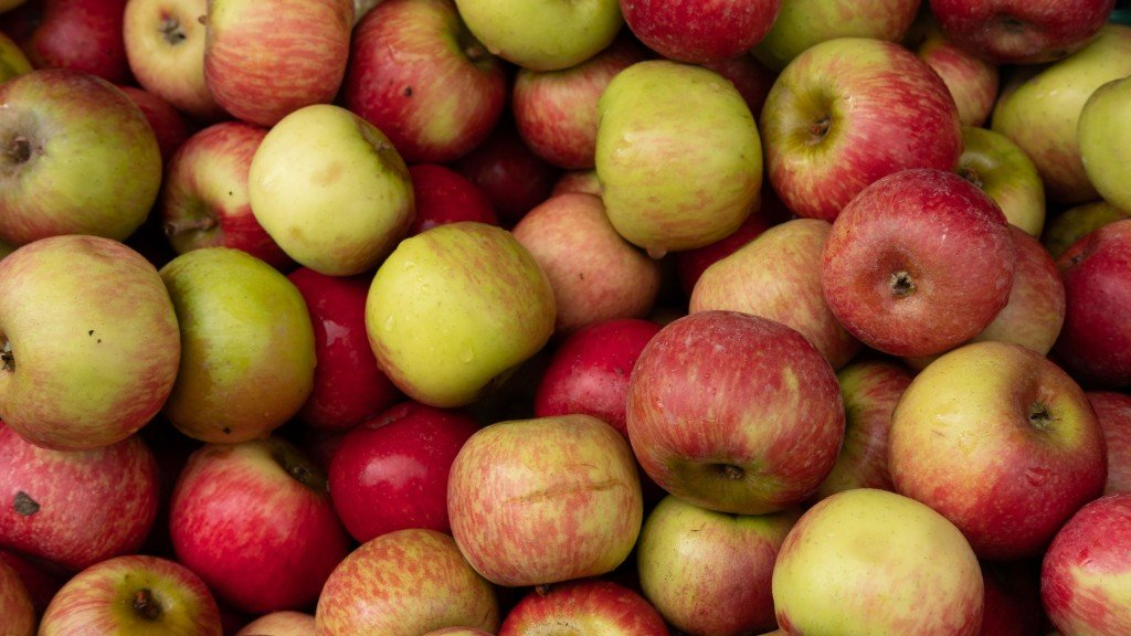 Washington's 2019 apple crop one of the largest in history