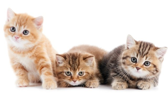 Clean litter box can help prevent urinary tract issues for cats