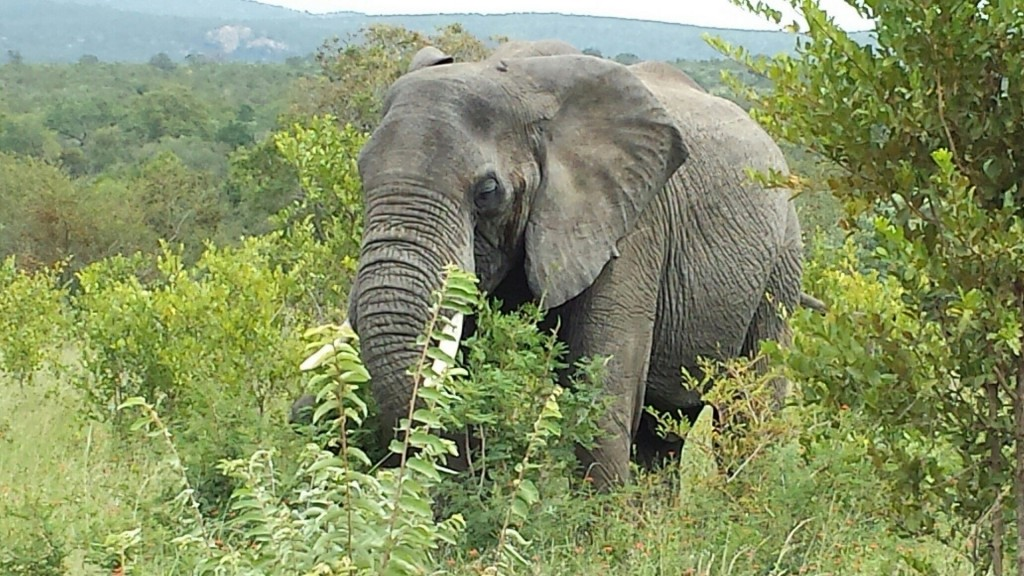 DNA tests on elephant tusks expose ivory trafficking rings