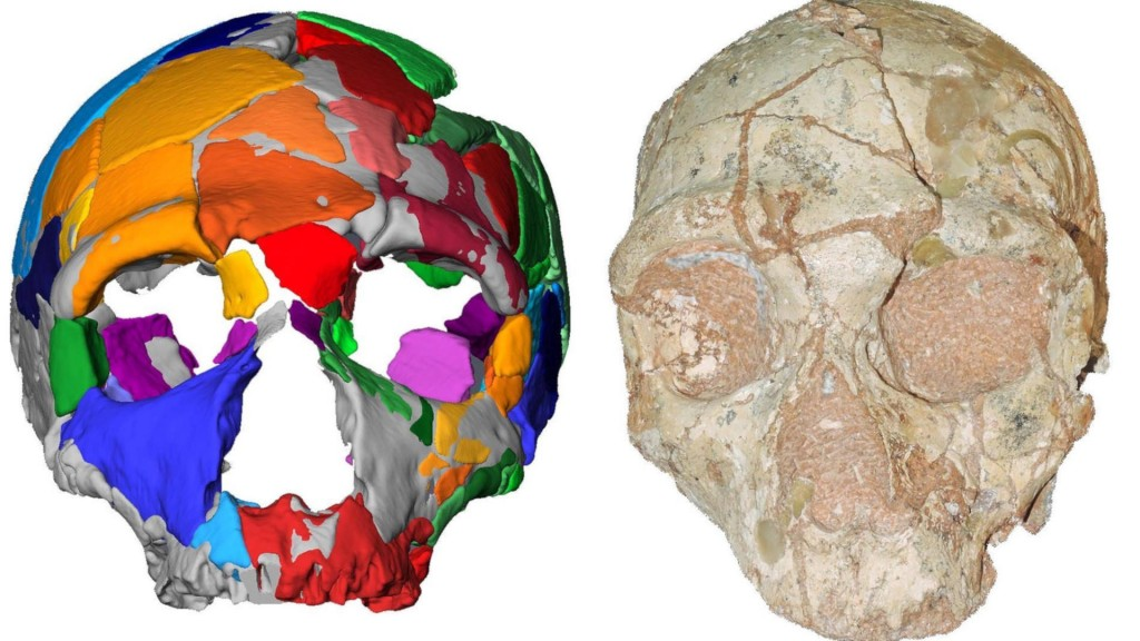210,000-year-old human skull in Greece oldest found outside Africa