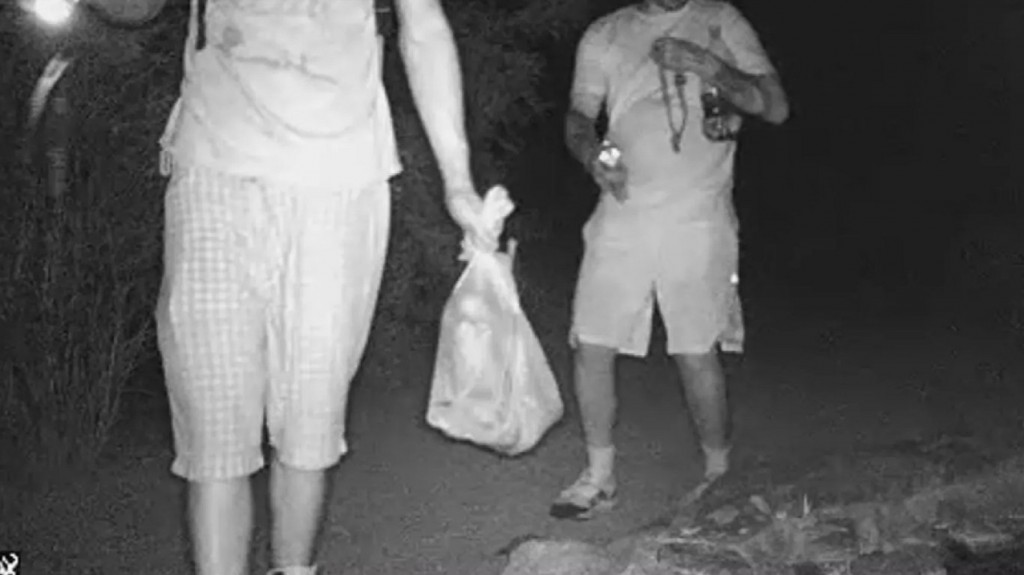 Toad thieves sought in Arizona
