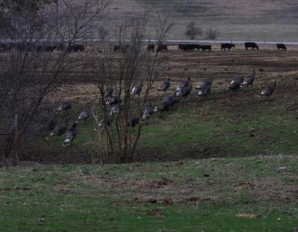 Special Turkey Hunting Season for Youth