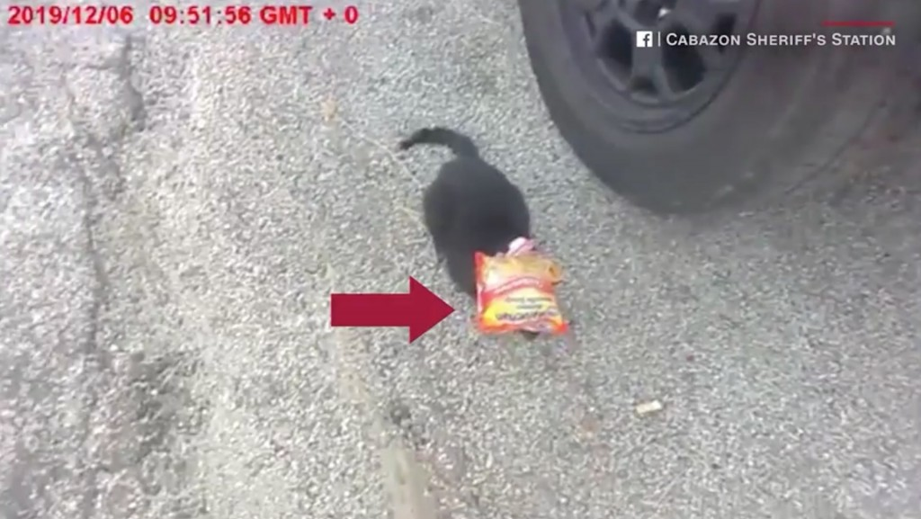 Cop lets the cat out of the (ramen) bag