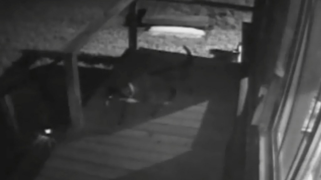Watch: Family saves dog from mountain lion