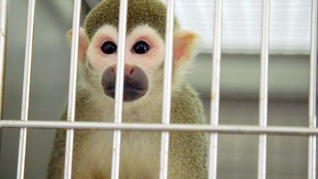 Retired FDA research monkeys find new home, music in Fla.
