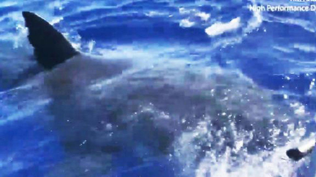 Great white shark tracked off coast of Conn.