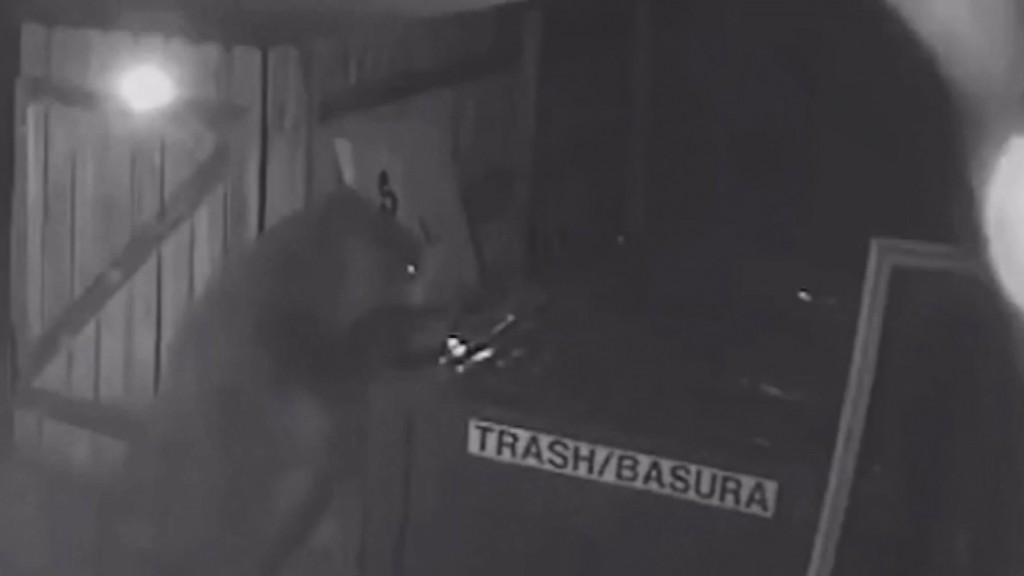 Bear-resistant dumpster thwarts bear's pot store meal