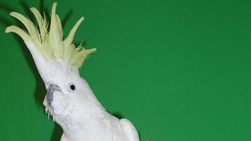 Dancing cockatoo named Snowball intrigues scientists