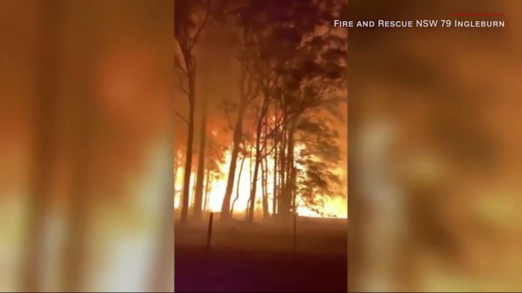 Bushfire turns treetops into towering inferno